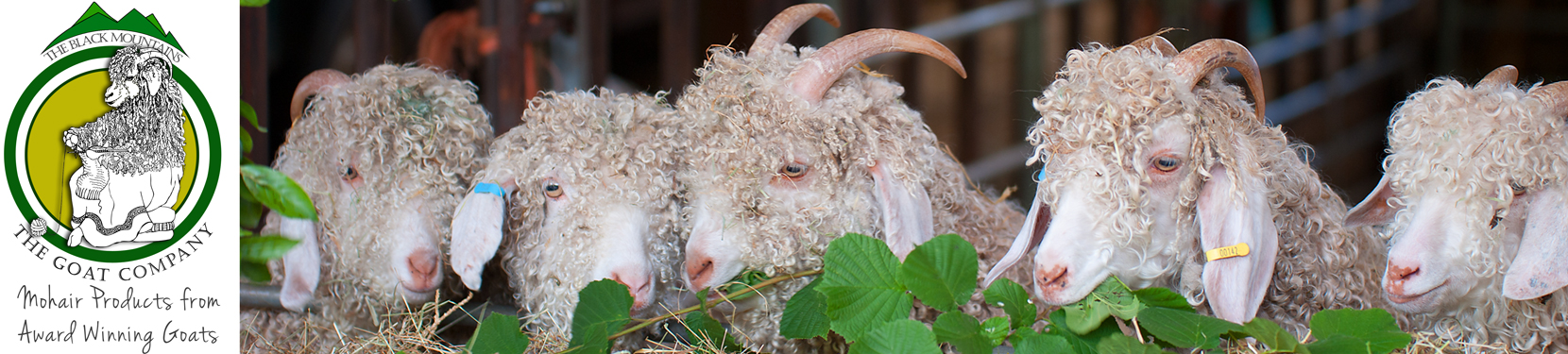 Sustainable Mohair products from The Goat Company